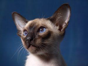 cat-806210__340