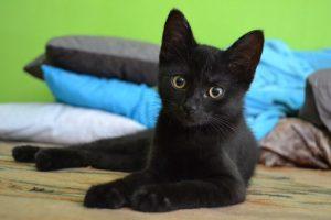cat-907749__340